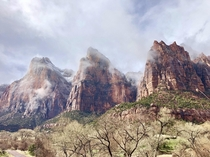 Spent spring break touring several national parks but nothing could have prepared me for the beauty of Zion National Park
