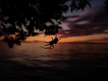 Spider catching the sunset over Lake Michigan