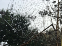 Spider Web in the Misty Morning