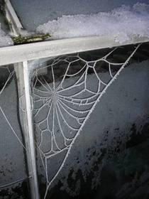 Spiders web frozen by freezing fog