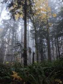 Spooky fall at Redmond Watershed Preserve Washington