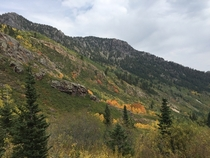 Spots of Fall in American Fork Canyon UT