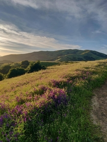 Spring golden hour in Marin County California