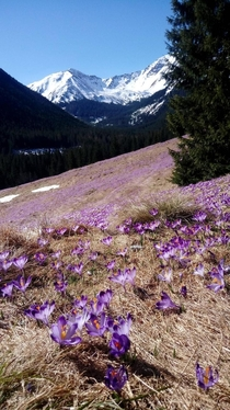 Spring in Polish Tatra Mountains OC