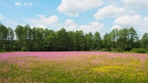 Spring is blooming in Holy Cross region Southeastern Poland