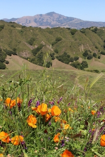 Spring near Mt Diablo Northern California
