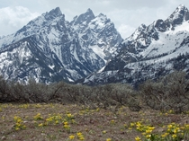 Springtime blossoms under the Cathedral Group Grand Teton National Park Wyoming