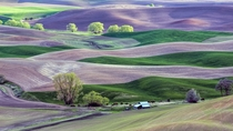 Springtime in the Palouse Hills
