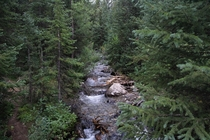 Spruce Creek in White River National Forest  x