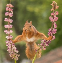 Squirrels got Talent Photo by Geert Weggen