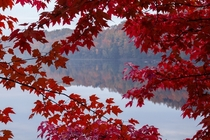 St-Maurice river through a red maple in Mauricie Quebec