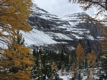 Stanley glacier trail after our september snowfall Yoho National park