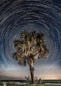 Star Trails encompassing a palm tree Florida