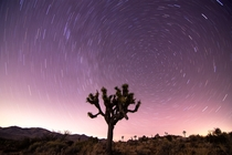 Star trails over a nighttime landscape Joshua Tree National Park  liamsearphoto