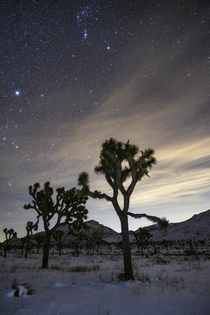 Starry Night in Joshua Tree