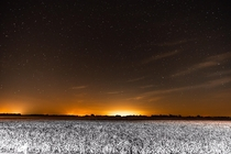 Stars over a field of snow in the Mississippi Delta