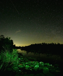 Stars over Georgias swamps