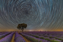 Stars trails tracked around the North Star Polaris over a lavender field  Photo by Joaqun Surez