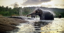 Still of an Asian elephant Elephas maximus bathing captured with K Dragon sensors