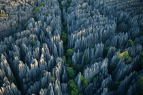 Stone Forest in Madagascar by Steven Alvarez