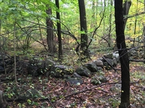 Stone wall in the forest marking the corner of an old abandoned farm Robert Treat Paine Estate Waltham Massachusetts