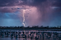 Storm lights up the sky above about  roosting Sandhill cranes Nebraska by Randy Olson
