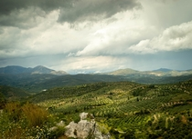Stormy skies over olive trees in Greece