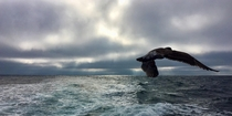 Stormy sky over the Pacific off of the Central California Coast with Seagull