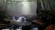 stream in a foggy forestxpost rfoggypics photo by Manuel Daneri