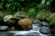 Stream in the caribbean jungle of Guadeloupe