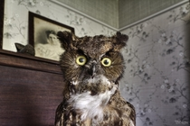 Stuffed Owl that Scared the Crap Outta Me Inside an Abandoned House in Rural Ontario