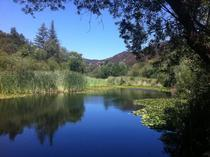 Stumbled upon this little piece of personal paradise hiking in Malibu yesterday Century Lake Malibu CA