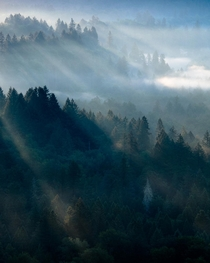 Stunning light rays illuminating the forest near Mt Hood just after sunrise