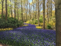 Stunning river of hyacinths