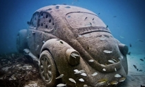 Submerged Car taken over by a school of fish
