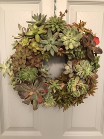 Succulent wreath a friend hand made for me