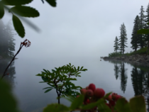 Such a calming fogprobably some poisonous berries but they look cool Washington USA
