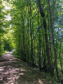 Summer hike on the Bruce Trail Ontario Canada