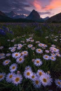 Summer is coming fast cant wait to get back to Glacier National Park for more scenes like this - Montana US - mattymeis