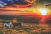 Summer On The Palouse Washington