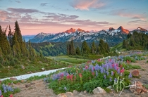 Summers Bloom - Paradise Mount Rainier National Park  photo by Michael Burkhardt