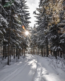 Sun Came Out Just Perfectly Between The Spruce Trees So I Took This Insane Picture  Latvia Ataiene