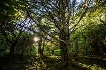 Sun peaking through the trees in Killarney National Park Ireland