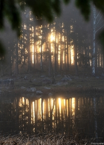 Sun rises through a misty forest island Pellinge Finland
