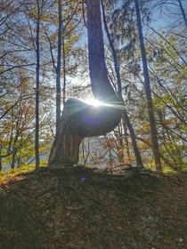 Sun shines through a weirdly shaped tree on Mount Krim near Ljubljana Slovenia
