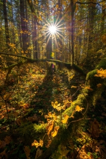Sun shining on the last remnants of fall in the Gifford Pinchot National Forest Washington