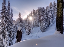 Sun Shining through the Snow Covered Trees of Lassen Volcanic National Park