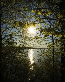 Sun streaming through the natural leaf cover in Picnic Point - Madison WI