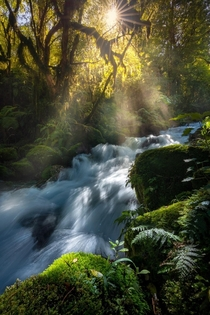 Sunlight caught in the mist Fiordland New Zealand OC x ig williampatino_photography
