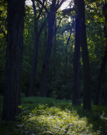 Sunlight coming through a group of trees creating an idyllic scene - Howard Temin Lakeshore Preserve